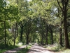 18-20200514_laantje-achter-Heumens-Bos-camping